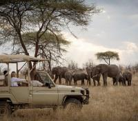 Untouched Tanzania Tours 2017 - 2018 -  Game Drive