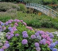 Small Group Tour: 2019 Corners of Cornwall Tours 2019 - 2020 -  Gardens of Trebah