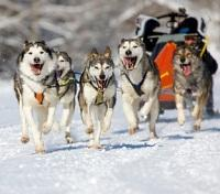 Ice Hotel Winter Adventure in Lapland Tours 2017 - 2018 -  Dog Sled