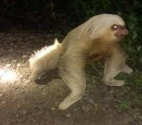 Quintessential Peru Tours 2019 - 2020 -  Sloth Spotted at Night