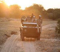 Cape Town, Winelands & Safari  Tours 2020 - 2021 -  Afternoon Game Drive