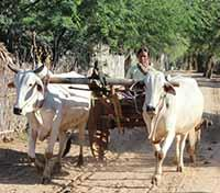 Mysteries of Myanmar Tours 2019 - 2020 -  Oxcart Carriage