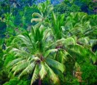 Exotic Bali & Lombok Tours 2019 - 2020 -  Balinese Jungle