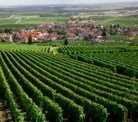 Paris and the Wines of Bordeaux & Burgundy Tours 2019 - 2020 -  Wine Trail