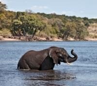 Victoria Falls & Botswana Highlights Tours 2019 - 2020 -  An Elephant Bath!