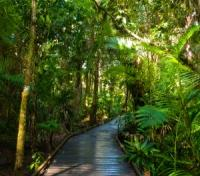 Australia & New Zealand Grand Explorer Tours 2017 - 2018 -  Daintree Rainforest
