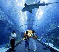 Emirati Highlights Tours 2019 - 2020 -  Dubai Mall Aquarium