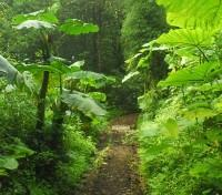 Costa Rica Cloudforest & Coast Tours 2018 - 2019 -  Jungle Trail