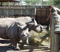 Safari and Sand Tours 2019 - 2020 -  Northern White Rhino Meal Time