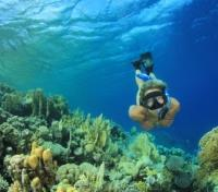 Bora Bora Signature Tours 2017 - 2018 -  Reef Diving