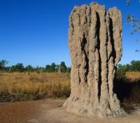 Australia Exclusive: The Aussie Bucket List Tours 2018 - 2019 -  Termite Mound