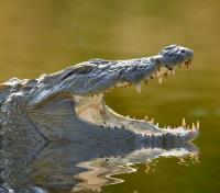 Authentic Sri Lanka: Wildlife & Locals Tours 2018 - 2019 -  Crocodile