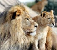 ME to WE: Kenya & Tanzania Game Tracker Tours 2017 - 2018 -  The King and Prince