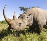 Kruger, Vic Falls & Hwange Safari Highlights Tours 2019 - 2020 -  Rhino in Sabi Sands