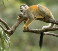 Costa Rica Highlights Tours 2017 - 2018 -  Squirrel Monkey Fun