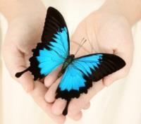 The Spirit of Australia Tours 2019 - 2020 -  Ulysses Butterfly
