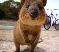 Western Australia In-Depth Tours 2020 - 2021 -  Quokka