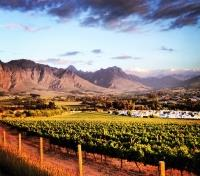 South African Grand Journey Tours 2018 - 2019 -  Vineyard near Stellenbosch