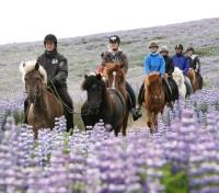 Iceland Adventure Honeymoon Tours 2017 - 2018 -  Icelandic Horseback Riding