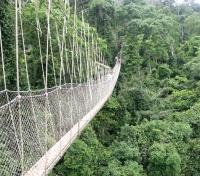 Treasures of West African History & Culture Tours 2018 - 2019 -  Canopy Walk