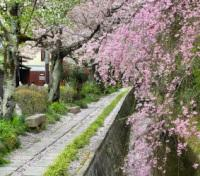 Cherry Blossom Season in Japan Tours 2020 - 2021 -  Philosophers Path
