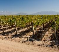 The Southern Cone Tours 2019 - 2020 -  Mendoza Vineyard