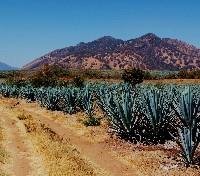Taste of Mexico: Food, Wine & Tequila Tours 2018 - 2019 -  Jalisco County