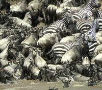 Kenya's Northern Frontier Tours 2019 - 2020 -  Migration River Crossing