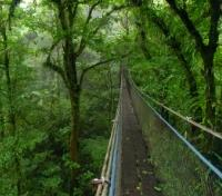 Costa Rica Highlights Tours 2019 - 2020 -  Monteverde Cloudforest Reserve