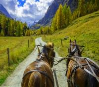 Switzerland Signature with Glacier Express Train Tours 2020 - 2021 -  Horse-drawn carriage in Roseg Valley
