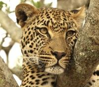 Best of Southern Africa Tours 2019 - 2020 -  Leopard Spots...