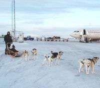 Arctic Delights of Northern Norway Tours 2019 - 2020 -  Dogsled Taxi