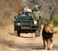 Cape Town, Winelands & Safari  Tours 2020 - 2021 -  Lion