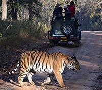 Signature Tour of India Tours 2019 - 2020 -  Tiger Tracking