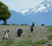 Argentina Active Adventure Tours 2020 - 2021 -  Penguins in Ushuaia
