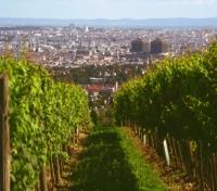 Exquisite Austria, Czech Republic & Poland  Tours 2017 - 2018 -  Viennese Wine