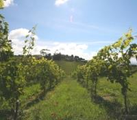 New Zealand & Fiji Signature Tours 2018 - 2019 -  Waiheke Island Vineyard