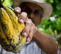 Colombia Signature Tours 2019 - 2020 -  Cocao from the Tree