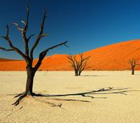 Namibia Highlights Tours 2017 - 2018 -  Dead Vlei