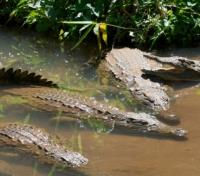 Madagascar Lemur Fever Tours 2017 - 2018 -  Crocodiles