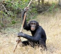 Safari and Sand Tours 2019 - 2020 -  Chimp