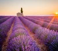 Hidden Provence Tours 2018 - 2019 -  Lavender Fields