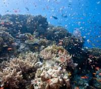 Bali Off the Beaten Track Tours 2019 - 2020 -  Coral Reefs at Menjangan Island