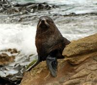 New Zealand Grand Tour Tours 2019 - 2020 -  Seal Coast