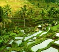 Bali Off the Beaten Track Tours 2019 - 2020 -  Jatiluwih Rice Field