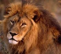 Kenya's Northern Frontier Tours 2019 - 2020 -  Lion