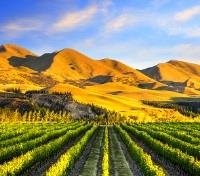 New Zealand: Tip to Tip  Tours 2020 - 2021 -  Waipara Vineyard