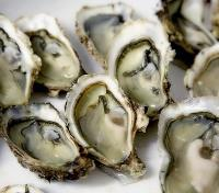 Ecuador and Galapagos Islands Signature Tours 2019 - 2020 -  Fresh Oysters