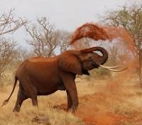 Uganda Highlights Tours 2019 - 2020 -  Elephant