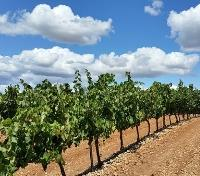 Wine & Culinary Delights of Spain Tours 2019 - 2020 -  Vineyards of La Rioja